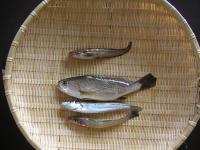 sakana_20041106.jpg