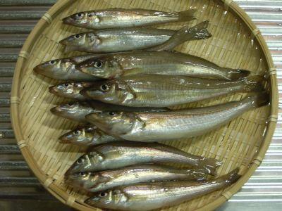 Sakana_20060527d